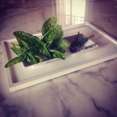 Italian herbs on Sarineen table. #design #scandinavian #designpieces #precious #amazing #blog #bianco #casadolcecasa #colortheory #classic #colours #green #insta_pick #lepianteofficinali #masterpieces #nature #natura #carraramarble #followchiarasroom #followme #taste #justaperfectday