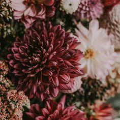 Marsala, Wedding Day, Plants, Pi Day Wedding, Marriage Anniversary, Plant, Marsala Wine, Wedding Anniversary, Planets