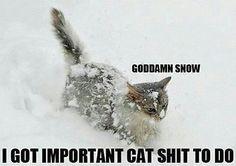 snow meme - Google Search