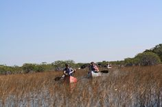 Canoe the Everglades, The Everglades National Park (Homestead, Florida)