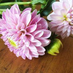 August Flowers, Flower Farm, Lilac, Pink, Dahlia, The Dreamers, Succulents, Instagram Posts, Plants