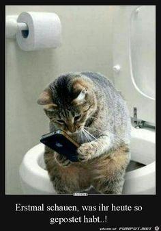 lustiges Bild 'Erst mal das Handy checken.jpg'- Eine von 24891 Dateien in der Kategorie 'witzige Bilder' auf FUNPOT.