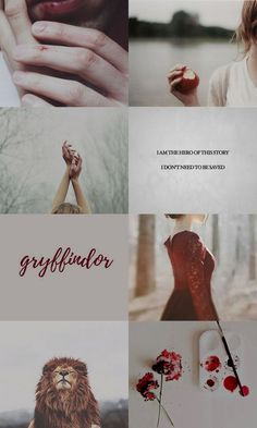 gryffindor aesthetic Harry Potter Houses, Harry Potter Love, Harry Potter Fandom, Hogwarts Houses, Harry Potter World, Draco Malfoy, Fortes Fortuna Adiuvat, Harry Potter Aesthetic, Nerd