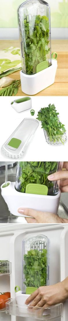 Herb stems sit slightly submerged in the water of the water-well, keeping them fresh for up to 3 weeks. #healthy #gardening #produce Herb Keeper Storage Container for the Refrigerator - Keeps Fresh for 3 Weeks! Cilantro, Rosemary, Thyme, Parsley, Chives, etc. $29.99