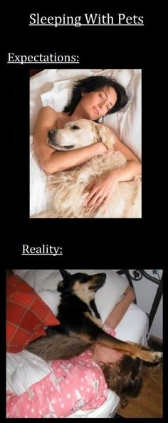 Sleeping With Pets: Expectations and Reality