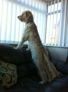 """Looks so much like a """"Man-Dog"""" with those straight long legs!"""