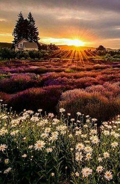 Hermoso amanecer ☕ buenos días Comunidad Feliz fin de semana excelente Viernes Dlb - Cira Arres - Google+