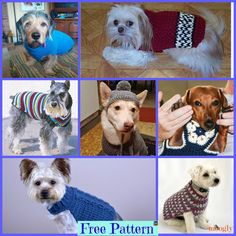 Dog Sweater - Free Patterns With the holidays so close and everyone excited, don't leave your dog out on the fun! Why not make him a Crocheted Dog Sweater for a great Christmas Crochet Dog Sweater Free Pattern, Crochet Dog Patterns, Crochet Baby Cardigan, Baby Blanket Crochet, Free Crochet, Animal Sweater, Knit Dog Sweater, Cat Sweaters, Christmas Crochet Blanket