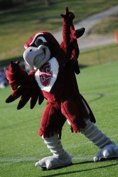 Rooney. Roanoke college mascot