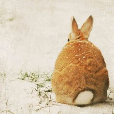 brown bunny buns