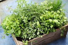 Recognizing and understanding the medicinal and nutritious benefits of fresh herbs and how to incorporate them is primordial in today's lifestyle