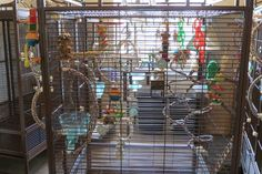 Conure bird cage. How the inside of the cage is setup