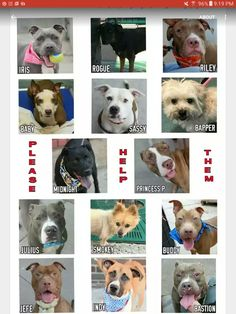 THIS IS THE KILL LIST FOR SUNDAY 9-4-16PLEASE SHARE EVERYBODYTHE AMOUNT OF HEALTHY DOGS THEY'RE KILLING IS OUTRAGEOUS ALL AVAILABLE @NYCDOGS.URGENTPODR.ORG  FOR NOW