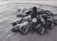 Robert Lebeck Am Strand von Cayar Senegal, 1960 Fotojournalismus, Brassai, Dead Fish, Monochrome Photography, Strand, Find Image, Berlin, Sailing, Wanderlust
