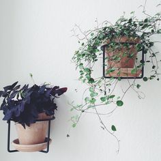 ferm LIVING Plant Holders: http://www.fermliving.com/webshop/shop/all-products/plant-holder-black.aspx available in more colours.