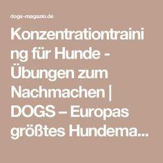 Konzentrationtraining für Hunde - Übungen zum Nachmachen | DOGS – Europas größtes Hundemagazin