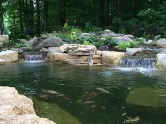 Pond renovation project #pondstars