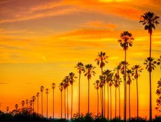 Sun-Kissed Sunset in Echo Park | Discover Los Angeles