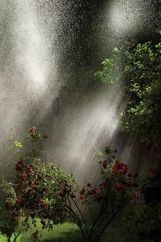 ***CLICK IMAGE*** Garden by zurab getsadze #plantphotography #photography