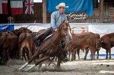 Pedro Cat cutting horse