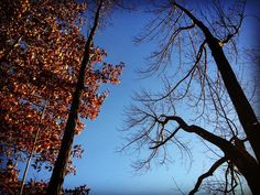 #WonderWatch 2015-143 The Haves and the Have-Nots #SandyLongPhotos #naturephotography #nature #LookUp #fall #impermanence #UpperDelawareRiverRegion #Ponder #trees #GlimpsesOfFall