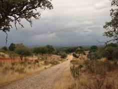 Se cierne la tormenta sobre el Parque Nacional de Monfragüe. Son las primeras del mes de Septiembre, los ciervos ya está llenando con sus bramidos la dehesa. Es el celo anual, la berrea.