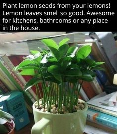 Going to try this & put in kitchen window seal