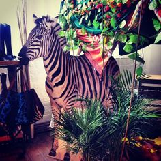 AW14 press day has started at Chiltern Street Studio.. Zebra, birds, jungle, fruit and tent. Are you ready to get WILD?