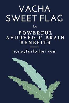Vacha Plant, Sweet Flag, Acorus Calamus Root Benefits, Uses Side Effects Precautions And Natural Remedies, Vacha Powder For Skin #ayurveda #ayurvedalife #medicinalherbs #herbalmedicine #honeyfurforher