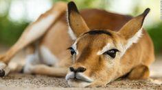 How to take amazing safari photos - CNN.com