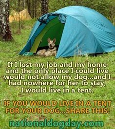 If I lost my job and my home and the only place I could live would not allow my dog.and I had nowhere for her to stay, I would live in a tent. If you would live in a tent for your dog.share this. Dog Quotes, Animal Quotes, I Love Dogs, Puppy Love, Tent Living, Lost My Job, My Animal, Animal Pics, Mans Best Friend