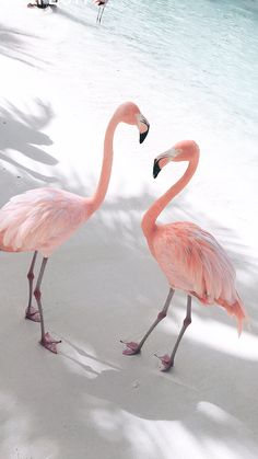 Flamingos on Beach wallpaper Flamingo Wallpaper, Summer Wallpaper, Animal Wallpaper, Nature Wallpaper, Wallpaper Backgrounds, Beach Wallpaper, Iphone Wallpaper, Bedroom Wall Collage, Photo Wall Collage