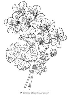 Realistic Flowers Coloring Pages | Coloring Pages/Patterns ...