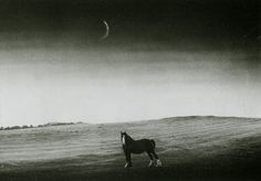 Edwin Smith. Horse. Black and White.