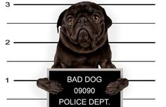 It's hard to believe that some of these #PetLaws are real!#CatNapsAndDoggieSnorts