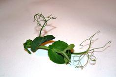 Beautiful Micro Leaf Tendrils, by WestlandsWow