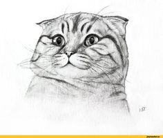 котэ,прикольные картинки с кошками,Bastet-mrr,песочница,красивые картинки