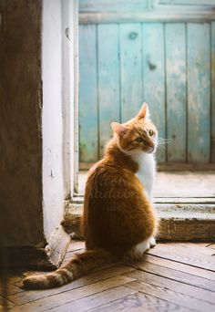 Tabby Cats Gallery - Cat's Nine Lives Pretty Cats, Beautiful Cats, Yellow Animals, Cat Reference, Cat Pose, Cats For Sale, Cat Aesthetic, Mint Blue, Blue Brown