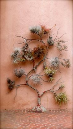 pink air plants