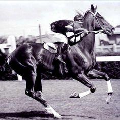 Pharlap- Awesome Japanese racehorse