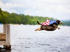 Patriotic pup! Photo and caption by Tracey Buyce