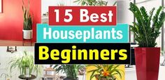 15 Best Houseplants For Beginners
