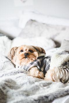 Foto aconchegante com clima de outono inverno. Cachorro da raça yorkshire com roupinha xadrez deitado em cima da cama cheia de  almofadas e mantinha cinza.