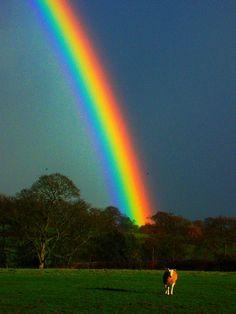 Наклеить на фото радугу красивые