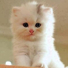 That is a cute kitten