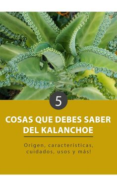 What are they and how do they take care of the Kalanchoe?- ¿Qué son y cómo se cuidan los Kalanchoe? The Kalanchoe are succulent plants that are very easy to care for and very decorative that you will surely love. Enter and know them in depth - House Plants Decor, Plant Decor, Mother Of Thousands Plant, Indoor Garden, Outdoor Gardens, Indoor Trees, Decoration Plante, Home Vegetable Garden, Detox Your Body