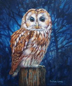 this was painted by the artist that used teach at an art group in Lancaster, called Cathartic Bird Paintings On Canvas, Canvas Art, Owl Artwork, Owl Pictures, Illustrations, Artist Painting, Bird Art, Bunt, Tawny Owl