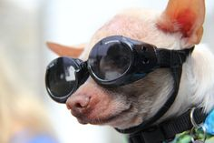 The Future is so Bright,I need to wear Shades. by Rusty Jhorn on Capture Jersey Shore // Saving lives is  fun at the Monmouth County SPCA 20th Annual Dog walk and Pet Fair Sat oct 5 Brookdale College