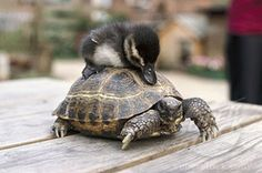 Amazing Friendship Of Animals Friendship Photos, Super Cute Animals, Animals Amazing, Adorable Animals, Cute Friends, Amazing Pics, Awesome, Funny Animal Pictures, Animal Pics