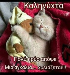 Funny Cute Cats, Sweet Dreams, Good Night, Cute Animals, Happy, Greek Sayings, Nighty Night, Pretty Animals, Cutest Animals